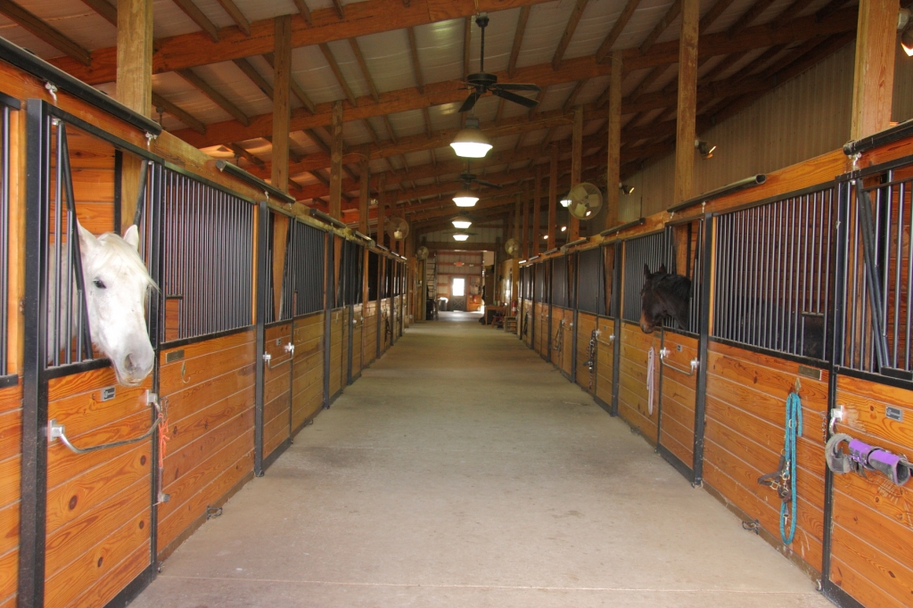 Inside the stable with horses